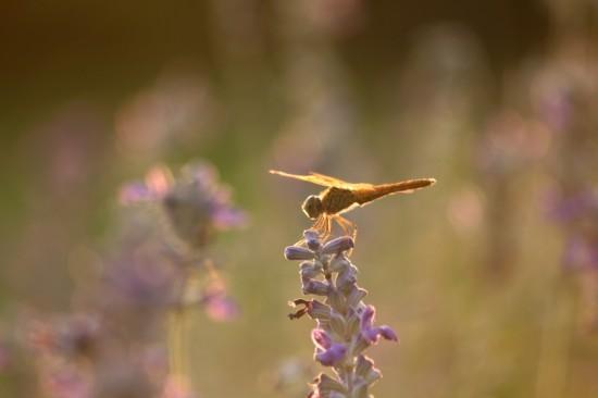 Insectes aménagement paysager