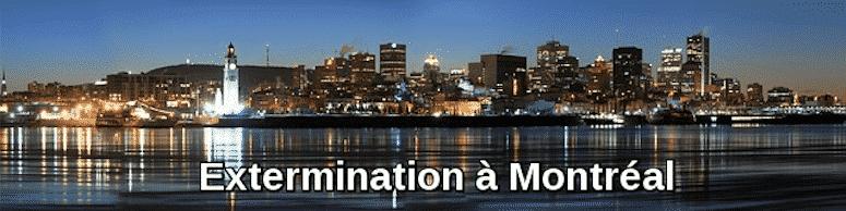 Extermination pas chère à Montréal