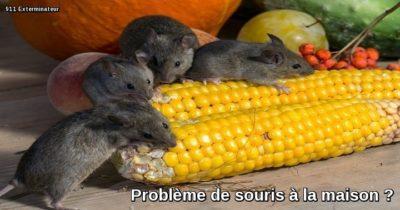 Problème de souris maison