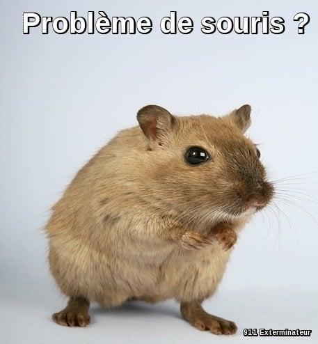 Problème de souris ? appelez un exper en extermination de souris