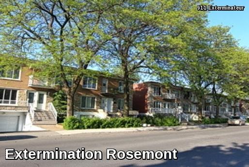 Extermination à Rosemont