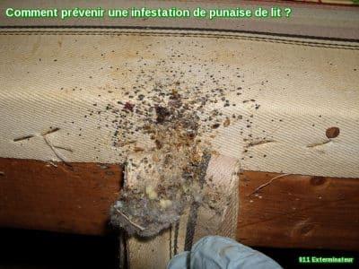 infestation de punaise de lit