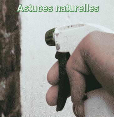 Astuces naturelles pour se débarrasser des fourmis