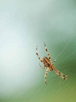Comment exterminer les araignées